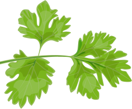 Parsley Leaves 1